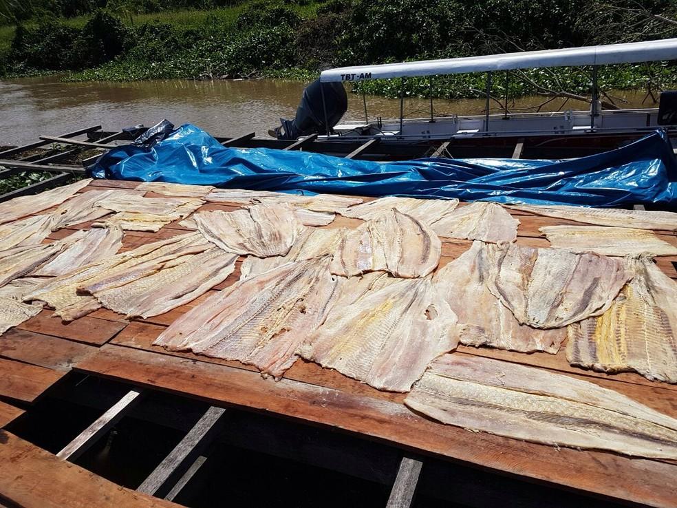 Dono do pescado não apresentou documento que comprovasse a origem do pirarucu, segundo polícia (Foto: Polícia Civil)