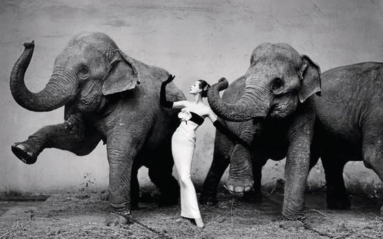 Richard Avedon  Dovima com elefantes | 1955  Um dos fotógrafos mais influentes de todos os tempos, Avedon combinava espontaneidade, glamour e elegância em suas imagens (Foto:  Richard Avedon)