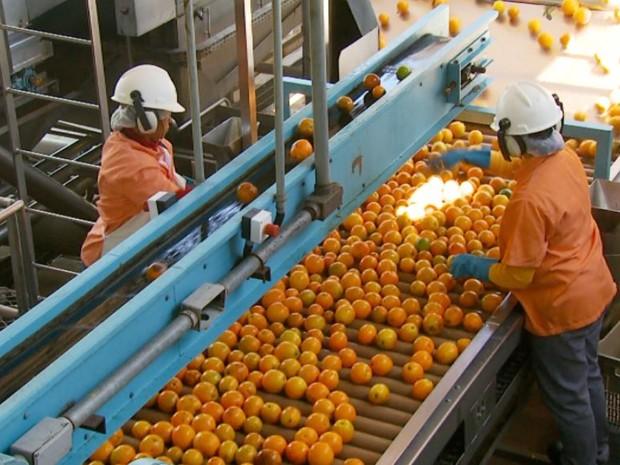 Beneficiamento de laranja em Bebedouro, SP (Foto: Reprodução/EPTV)