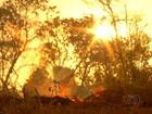Ações de combate às queimadas são antecipadas no TO por causa do calor
