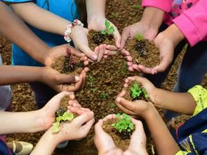 Questão ambiental em escola se torna prioridade com projeto  (Foto: Tânia Vital / Arquivo Pessoal)