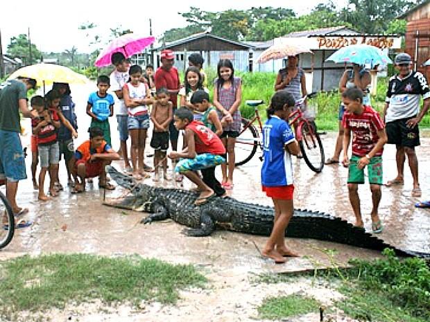 Animal virou atração para moradores e crianças do município (Foto: José Souza/TV Amazonas)