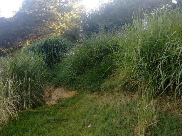 Local tem mato alto e água parada em Piracicaba  (Foto: Thainara Cabral/G1)