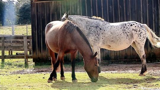 PM reduzirá em mais de 60% o número de cavalos usados para o policiamento no RS