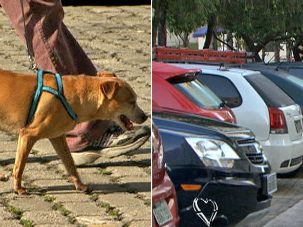 Vagas na garagem e animais são problemas corriqueiros (Foto: Mais Você / TV Globo)