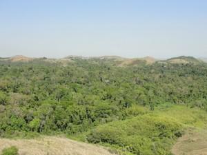 Vista Panorâmica da Floresta da Cicuta (Foto: Arquivo/ICMBio-ARIE Floresta da Cicuta)