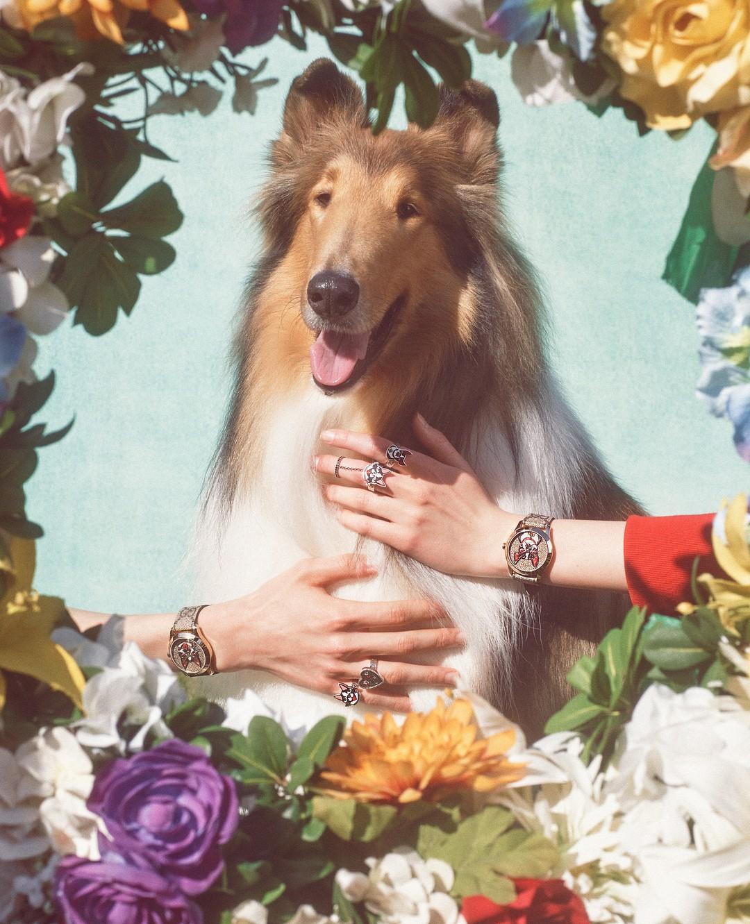 Ano Novo Chinês: Gucci lança coleção inspirada no ano do cachorro (Foto: Divulgação)