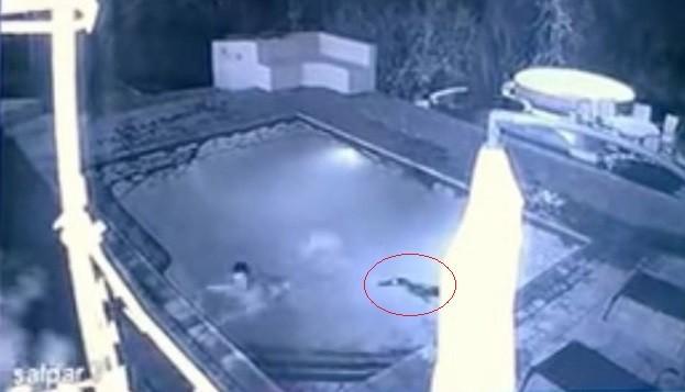 Desespero na piscina de hotel na África