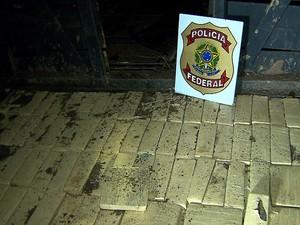 Droga apreendida em Juatuba (MG) estava no fundo da carroceria de um caminhão de bois. (Foto: Reprodução/TV Globo)