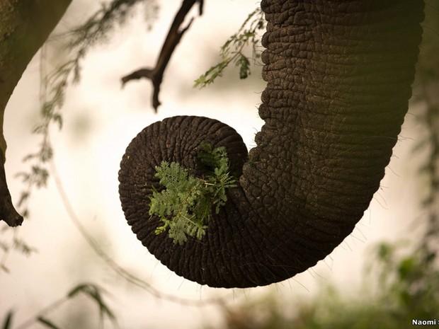 """A categoria """"Wildlife Insight"""" premiou Naomi Stolow por essa imagem da tromba de um elefante feita na África do Sul. (Foto: Naomi Stolow)"""