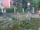 Árvore cai e atinge mulher em frente ao Museu Imperial em Petrópolis, RJ