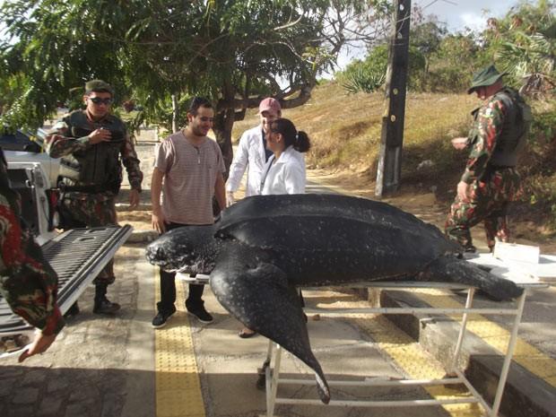 Tartaruga-gigante morreu no litoral Norte do RN (Foto: Fred Carvalho/G1)