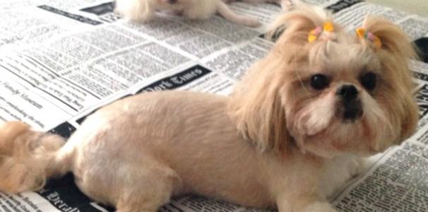 E veja os cuidados que você deve ter com seu cãozinho no calor (Foto: Daniela Coelho/RBS TV)