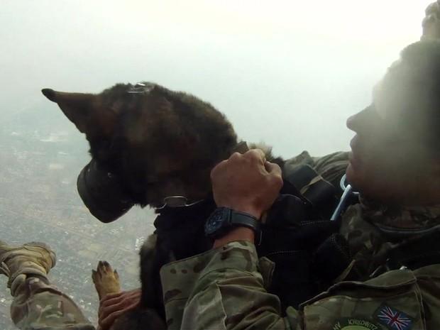 Os 'cães paraquedistas' que combatem caçadores de animais na África (Foto: Reprodução/BBC)