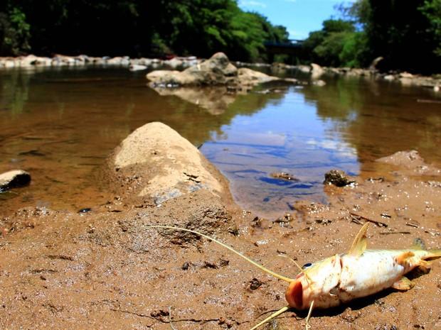 Peixe morto no leito do Rio Atibaia na região de Campinas (SP), nesta terça-feira (04). Sem chuva, o Sistema Cantareira, que regula a vazão dos principais rios da região de Campinas,está enfrentando a pior seca da década. (Foto:  Denny Cesare/Futura Press/Estadão Conteúdo)