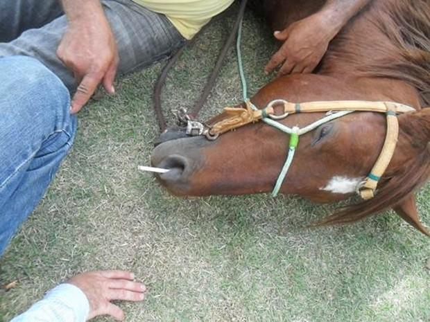 Tratador que dançou funk em cima de cavalo é indiciado por maus-tratos, em Bela Vista de Goiás (Foto: Divulgação/Dema)