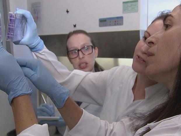 Pesquisadores de Rio Preto buscam meios para combater o vírus (Foto: Reprodução/ TV TEM)