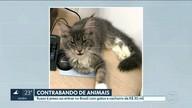 Russo é preso por contrabando de animais com gatos e cachorro avaliados em R$ 30 mil