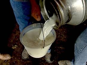 Produção de leite zootecnia (Foto: Divulgação)