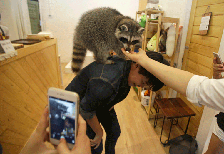 Cliente brinca com raposinha (Foto: Sakchai Lalit/AP)