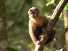 Severínia e Cajobi confirmam mortes de macacos por febre amarela