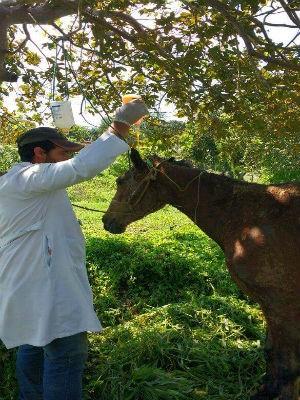 Animal recebeu tratamento veterinário após ficar ferido (Foto: Vale Verde)