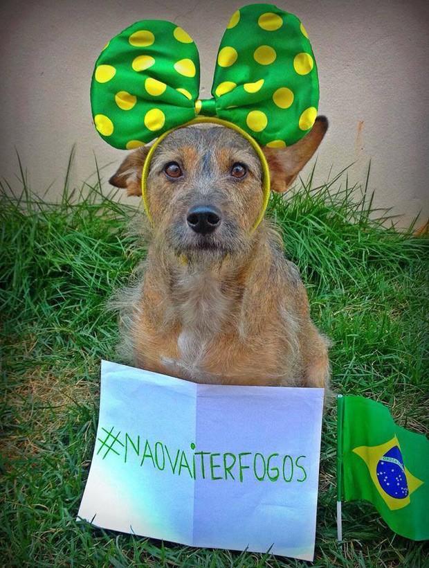 Cachorra Firpa posa com cartaz; sua dona, Brunna Polasse Brito começou campanha contra fogos de artifício no Facebook (Foto: Brunna Polasse Brito/Vc no G1)