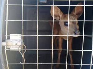 Animal foi levado para o IEF em Montes Claros (Foto: Polícia Militar/Divulgação)