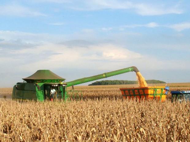 Colheita do milho safrinha atingiu 6% da área cultivada em Mato Grosso do Sul (Foto: Aprosoja/MS/Divulgação)