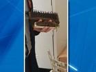 Consumidor engasga com cerda de metal em lanche do Habib's em MS