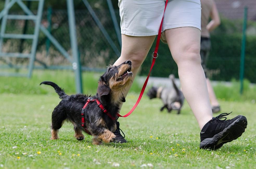 Passear regularmente com o animal é a melhor maneira de prevenir problemas comportamentais (Foto: Divulgação)