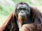 Dados revelam 'impressionante' extensão do comércio ilegal de primatas