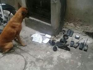 Cães dão apoio na varredura feita pela PM na Maré (Foto: Polícia Militar / Divulgação)