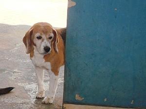O cão Gabriel, fotografado no Centro de Zoonoses de Araraquara (Foto: Divulgação/Arquivo Pessoal)