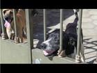 Vizinhos se unem e recolhem cães abandonados em casa em Campos