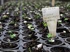 DF prevê plantar 250 mil árvores em todas as regiões até o fim do ano