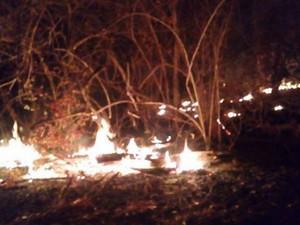Fogo atinge zonas de mata no oeste de Bahia (Foto: Secretária de Meio Ambiente/Divulgação)