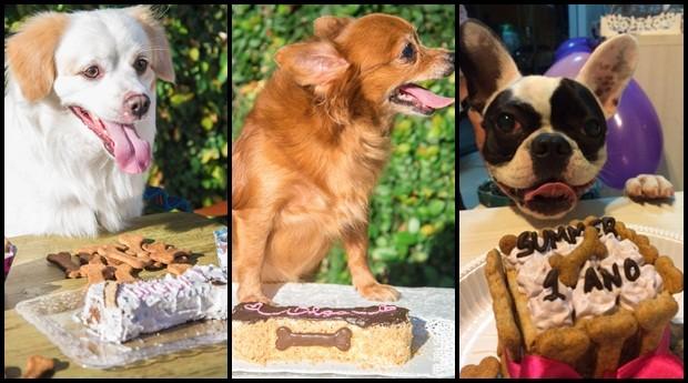 Cachorros comemorando festa organizada pela Chef di Animale (Foto: Divulgação)