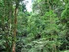 Mata Atlântica perdeu 133 km² de vegetação em um ano, afirma censo