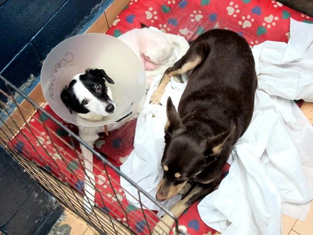 As cadelas Manuela e Bombom viraram amigas (Foto: Mariane Rossi/G1)