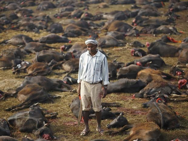Homem observa búfalos que foram sacrificados nesta sexta durante festival hindu no Nepal (Foto: REUTERS/Navesh Chitrakar)