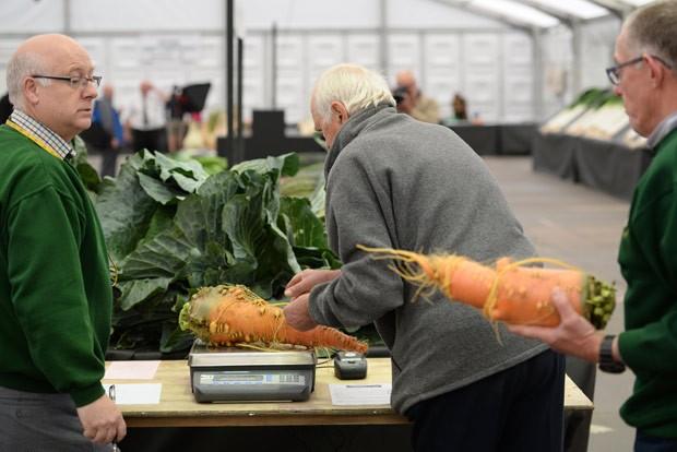 Juízes pesam cenouras que participam do campeonato de vegetais gigantes (Foto: Oli Scarff/AFP)