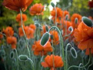 screensaver flores