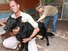 Secretaria pretende imunizar 226 mil animais contra a raiva em Goiânia
