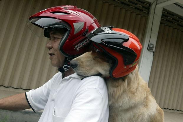 Ace curte o passei de fim de semana com seu dono (Foto: Juni Kriswanto/AFP)