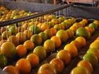 Suco de frutas cítricas equivale a mais de 62% das exportações de SE