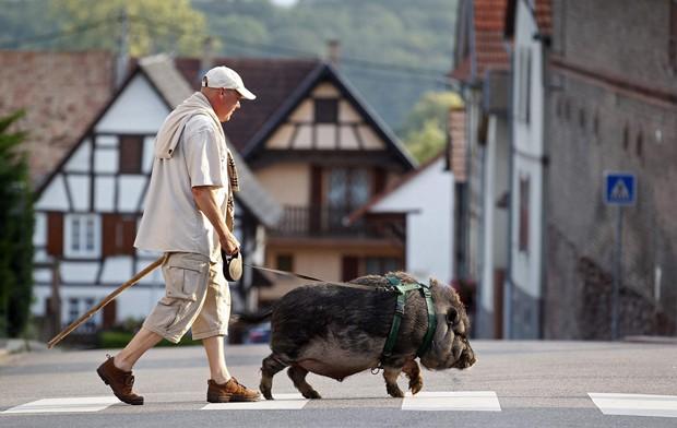Christophe Lutz caminha com Marcel na pequena aldeia de Kolbsheim perto de Estrasburgo, na França. O animal foi adotado quando tinha 3 meses e foi abandonado por sua mãe (Foto: Vincent Kessler/Reuters)