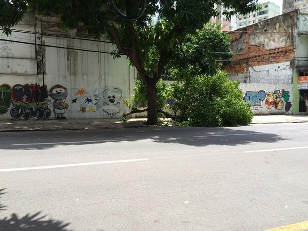 Árvore caiu na tarde desta terça-feira, 9, na avenida Nazaré. (Foto: Catarina Barbosa/G1 PA)