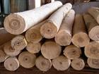 Paricá é alternativa competitiva ao eucalipto e ao pinus na indústria