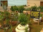 Moradores montam horta em praça no setor Pedro Ludovico, em Goiânia